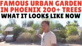 Mace's Backyard Desert Garden Tour – Urban Food Forest – What It Looks Like Now