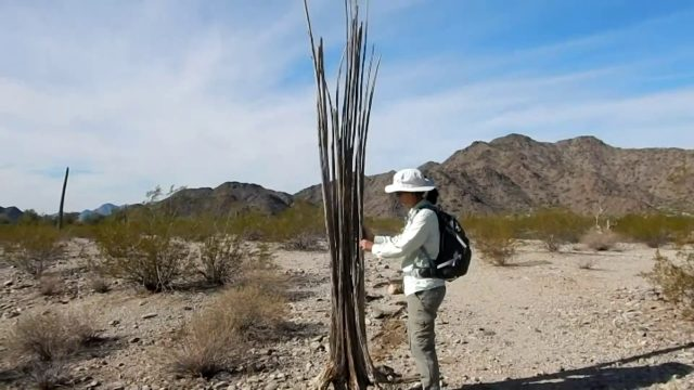 Hiking Arizona – Sonoran Desert National Monument –  Margie's Cove Trail