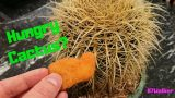 How To Fertilize Cacti – Feeding Cacti