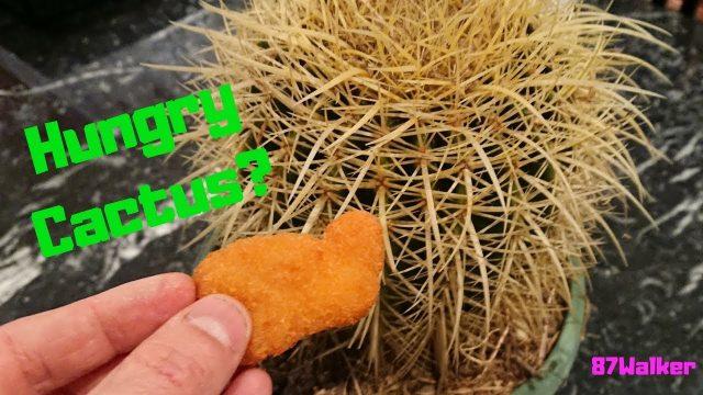 How To Fertilize Cacti – Feeding Cacti