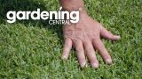 Drought tolerant turf and grass