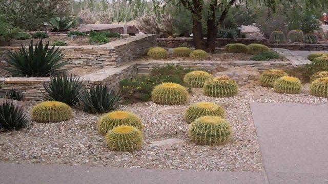Desert Landscape Design Phoenix