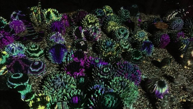 2018 Desert Botanical Garden Light Show