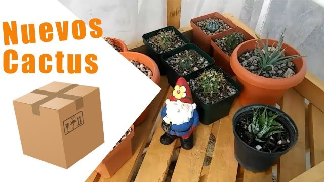 Cactus unboxing – by Desert plants
