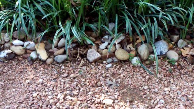 Texas Nativescapes Landscape Design Lab & Backyard Urban Oasis
