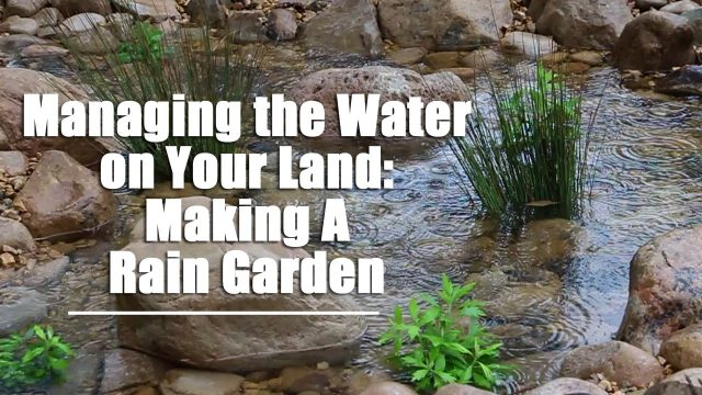 Managing the Water on Your Land- Making A Rain Garden