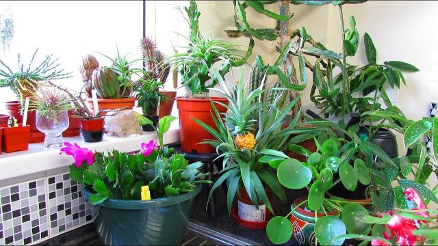 Our Indoor Houseplant & Cacti & Succulent Plant end of year UPDATE