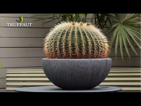 Comment rempoter un cactus ? – Jardinerie Truffaut TV