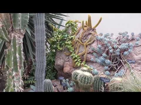 World Deserts exhibit at the United States Botanic Garden (Washington, DC)