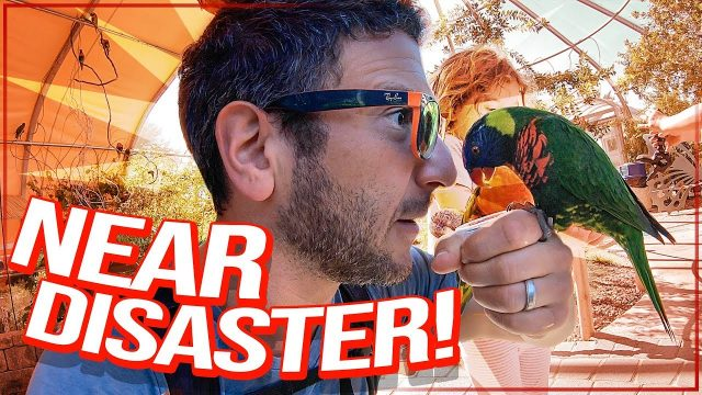LOST ALL MY CAMERA GEAR at the Living Desert Zoo, California [Viva Frei Travel Vlog]