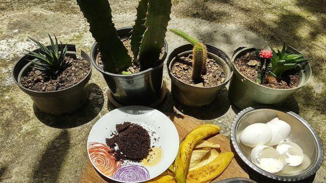 🌵¿Tienes Cactus? Aplicale esto y los Tendrás Hermosos Siempre!