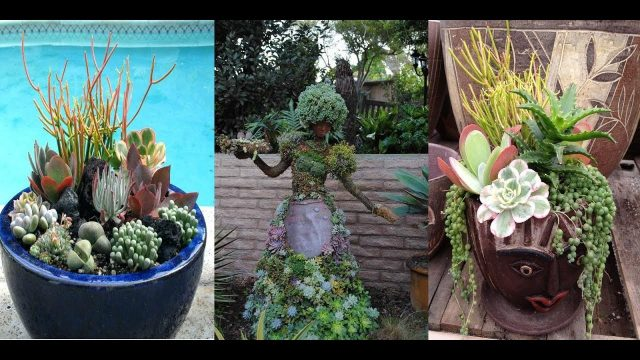 Growing Succulent Plants Rock Gardens Indoors and Outdoors Easy Gardening Cactus