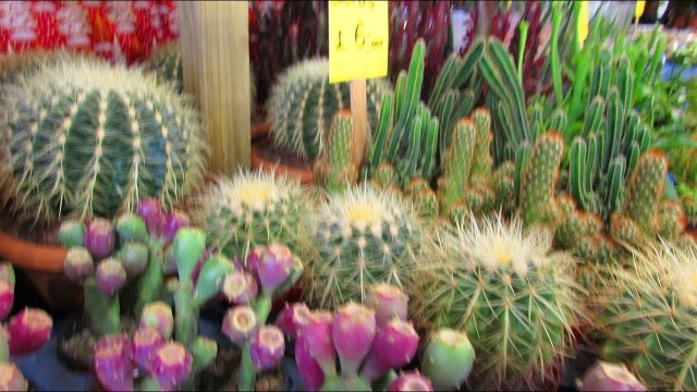 Join us Cactus and Succulent Plant shopping at Belfast Christmas Market -VLOG