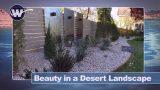 Beauty in a desert landscape