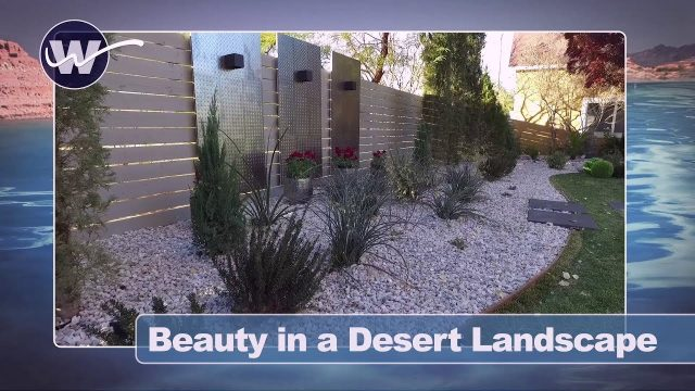 Beauty in a desert landscape