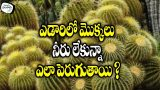 How Plants Survive Without Water In Desert ? || Telugu Timepass Tv