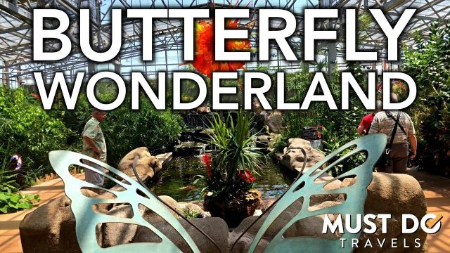 Butterfly Wonderland In Phoenix, Arizona | Must Do Travels
