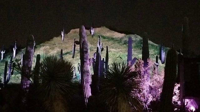 Phoenix Botanical Gardens 2019