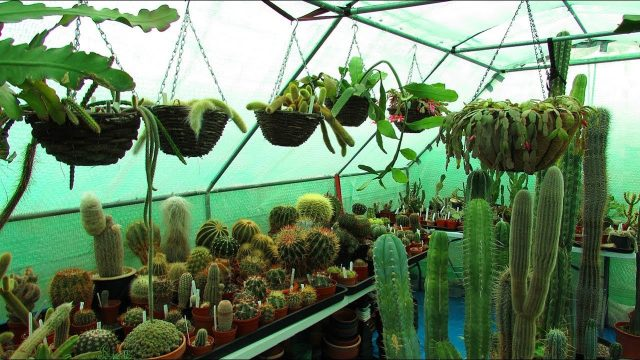 Our Polytunnel Cacti & Succulent Plants Collection end of Year – UPDATE