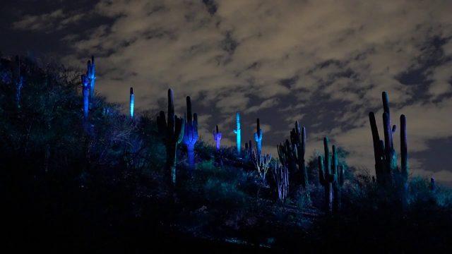 Electric Desert: Desert Botanical Garden, Phoenix, AZ