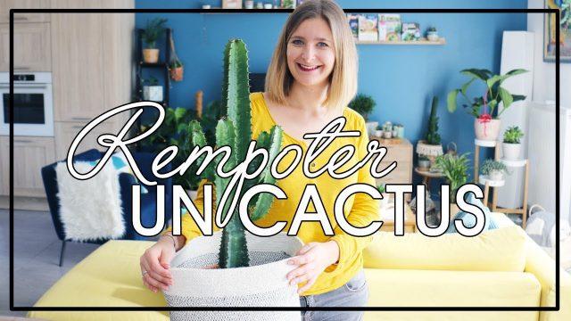 Comment rempoter un cactus ?