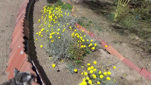 The Master Gardener Garden in Tucson Arizona
