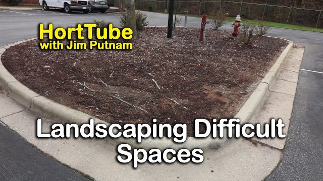 Landscaping A Very Difficult Space – Drought Tolerant Ornamental Shrubs