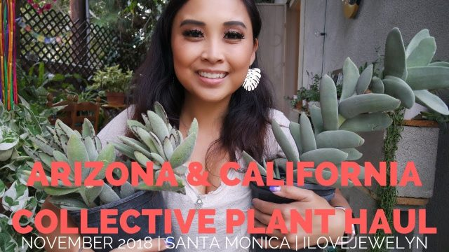 Arizona & California Collective Plant Haul | November 2018 | ILOVEJEWELYN