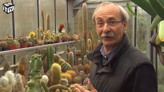 Cactus et plantes succulentes