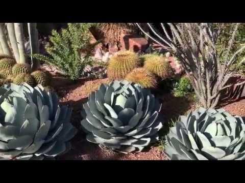 Desert Landscaping 2019