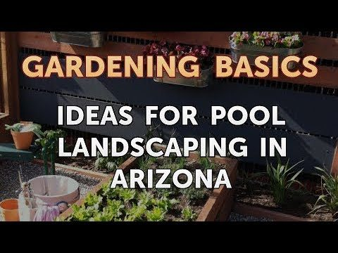 Ideas for Pool Landscaping in Arizona