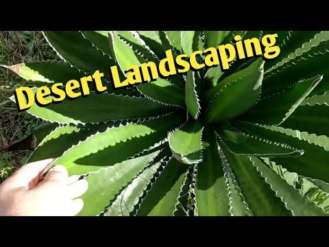 Desert plant collection