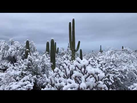 Snow coats cacti in Arizona desert