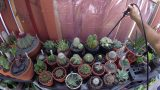 Watering Cacti 101 – Tips on how you should be watering cacti and succulents!