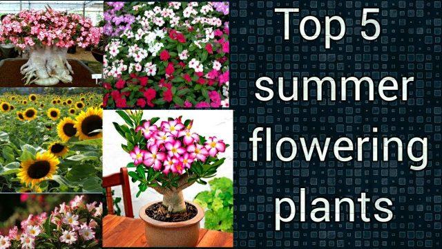 इस गर्मी में अपने गार्डन को फूलों से भरना चाहते हैं तो इन 5 पौधों को लगाएं