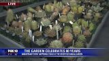 Celebrating 80 years with Desert Botanical Garden
