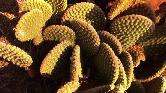 desert gardens final