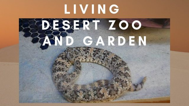 Palm Desert Living Desert Zoo and Garden