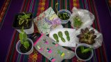 My AMAZING Cacti and Succulent Plants Gifts Unboxing