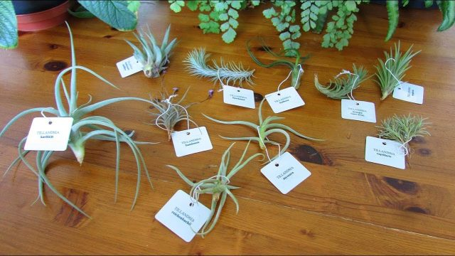 Unboxing our new Tillandsia Air Plant Haul from craftyplants.co.uk