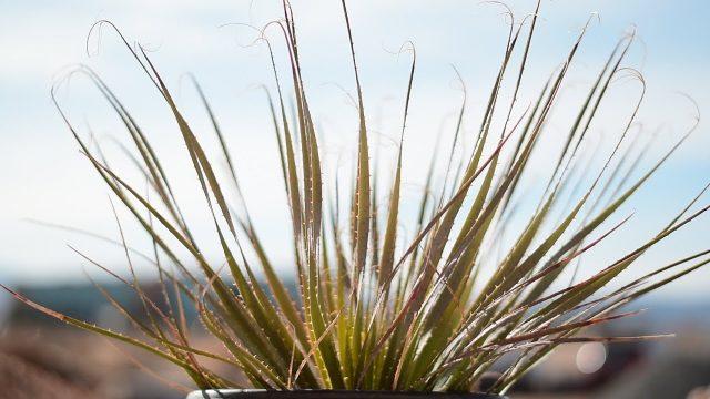Desert Plant Types