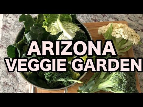 Phoenix Veggie Garden and Frost Bitten Plants | Living in Arizona