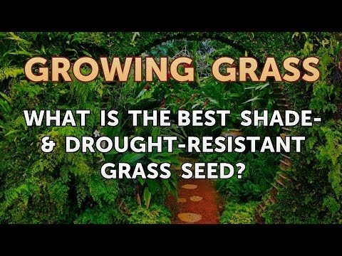 What Is the Best Shade- & Drought-Resistant Grass Seed?
