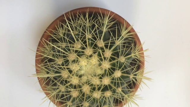 Types of Indoor Cactus Plants / Cacti to Grow Inside / Cactus Identification / Identify Your Cactus