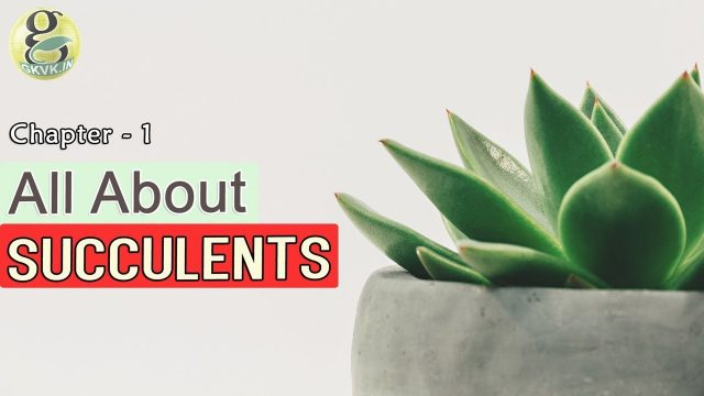 CACTI AND SUCCULENTS for beginners – INTRODUCTION | Difference between cactus and succulents