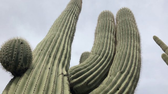 Arizona Sonoran Desert – A Tour With Steve