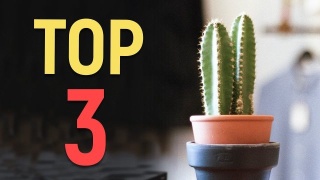 TOP 3 CACTI FOR BEGINNERS!