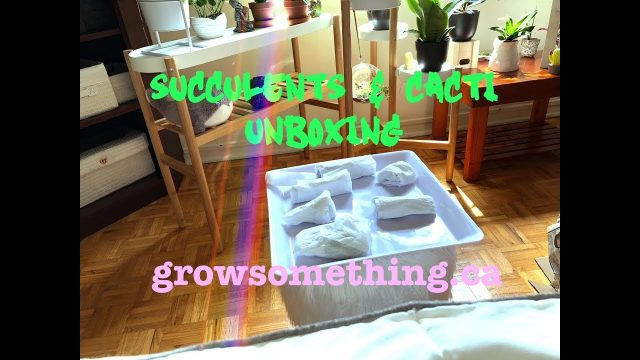 Unboxing SUCCULENTS & CACTI 🌵 www.growsomething.ca