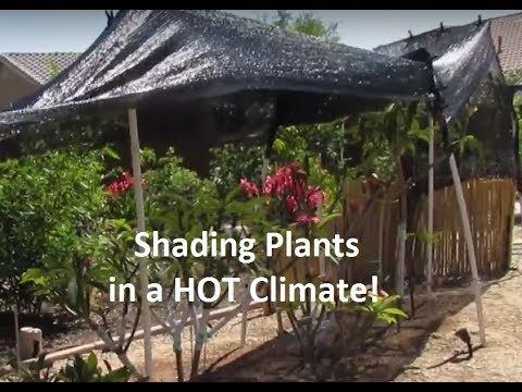 Shading Plants in the Desert Heat