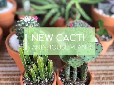 NEW CACTI AND HOUSE PLANTS | WEEK UPDATE